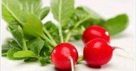 170 5 - البصل والفجل.. أطعمة تحميك من نزلات البرد