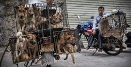 195 7 - لأول مرة.. الصين ترفع القطط والكلاب من قائمة الحيوانات القابلة للأكل