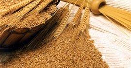367 6 - أزمة القمح في مصر.. تعرف على الإنتاج المحلي المتوقع حصاده