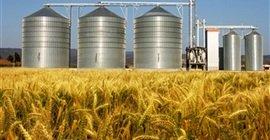 750 5 - رئيس بحوث القمح: كان أقصى طموحنا عام 1995 تنفيذ 4 صوامع فقط